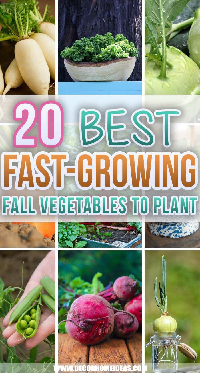 Best Fast Growing Fall Vegetables. Growing your vegetable garden in containers is easy and fun. Try these fast-growing fall vegetables to get plenty of harvests. #decorhomeideas