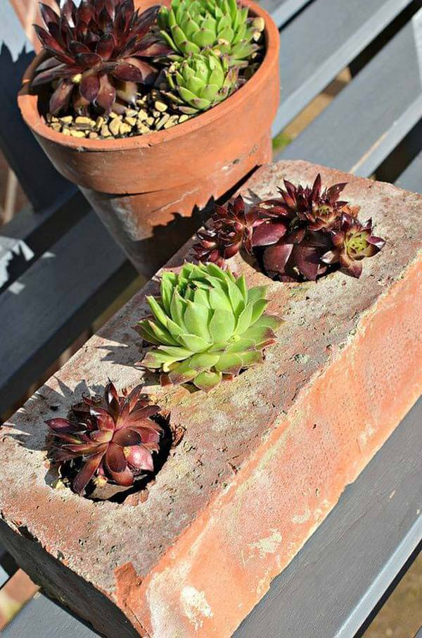 Think Outside the Box with Succulent Planters #oldbrickideas #decorhomeideas