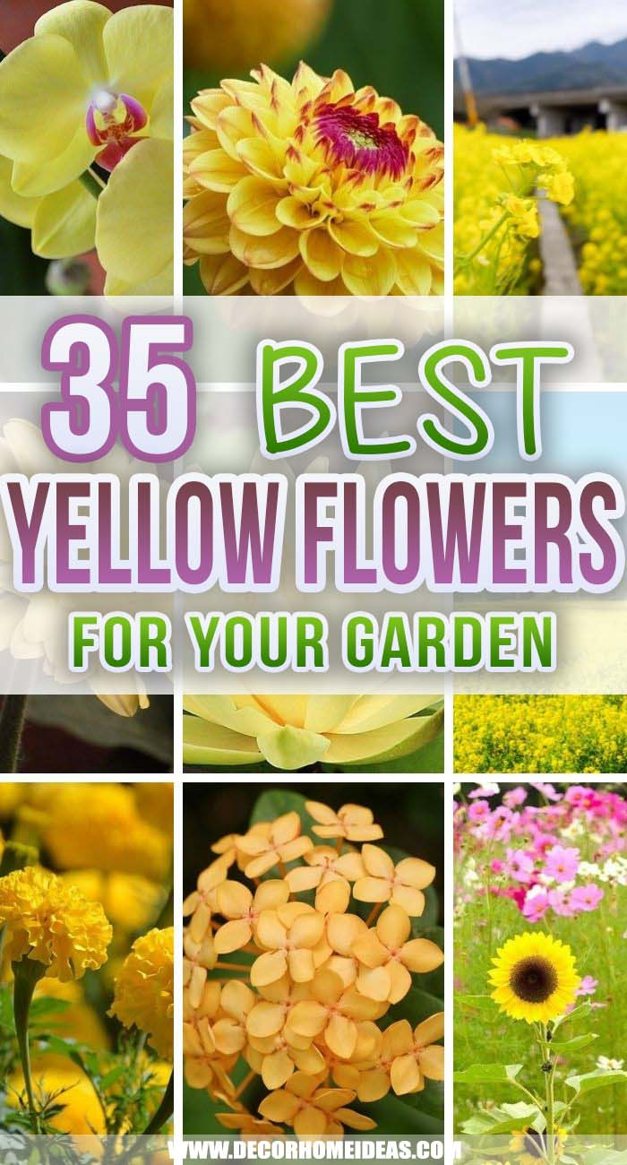 Best Yellow Flowers For Your Garden. Spruce up your backyard with yellow flowers that will add color and vibrance and also attract pollinators and butterflies. Give your garden the best fragrance. #decorhomeideas